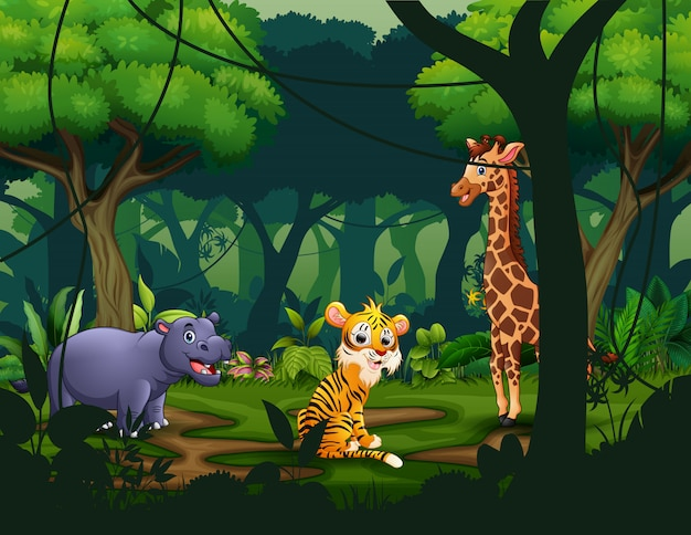 Wild animals in a tropical jungle rainforest background