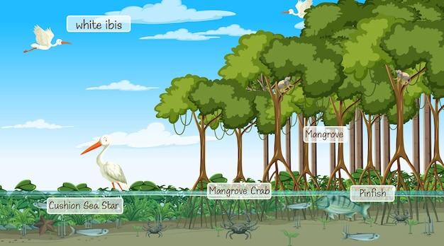 Animali selvatici con nome etichetta nella scena della foresta di mangrovie