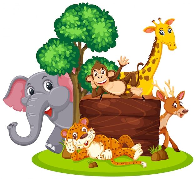 Wild animals with wooden board
