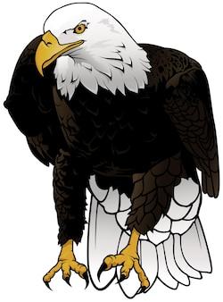 Дикий белоголовый орлан иллюстрации, изолированные на белом фоне
