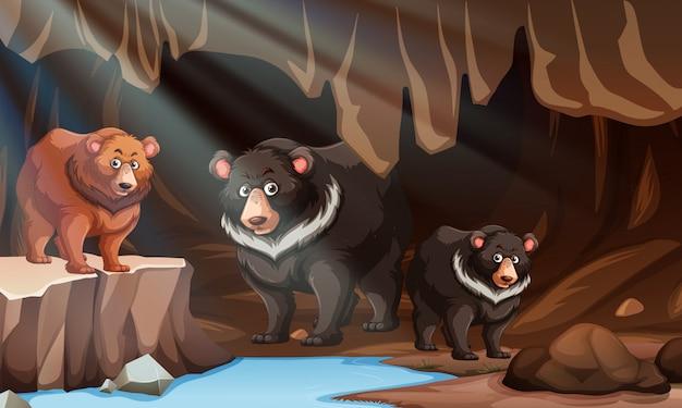 洞穴に住む野生のクマ