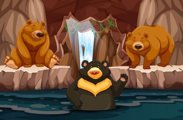 Wild bears in underground cavern with water