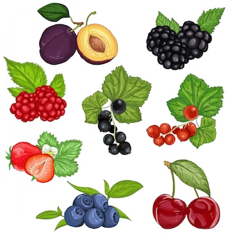 Wild berries and fruit set