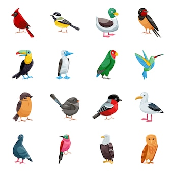 Wild bird cartoon elements. isolated illustration of wild animal. set of elements bird.