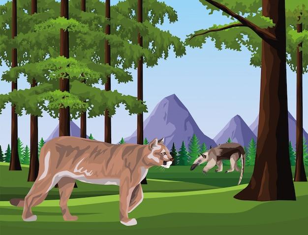 Wild cougar in the jungle scene