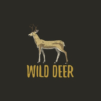 Wild deer engraved hand drawn in old sketch style, vintage animals logo