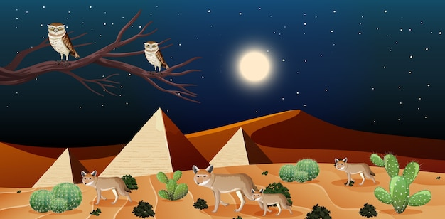 Wild desert landscape at night scene