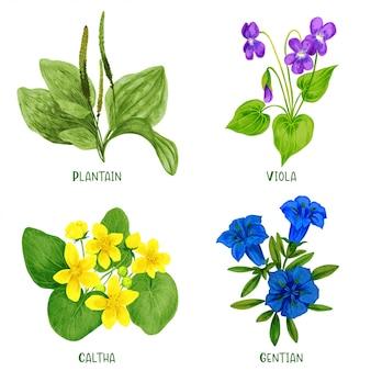 와일드 필드 식물과 꽃 세트, 손으로 그린 수채화 그림