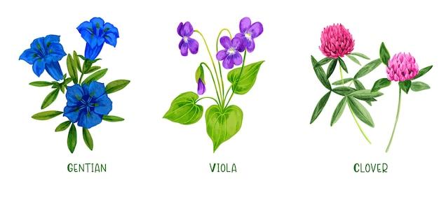 野原の植物や花のセット、手描きの水彩画