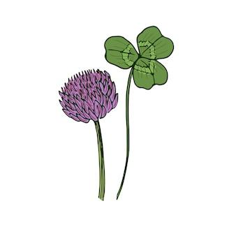 Wild flower illustration. clovel medical herbal. vector art.