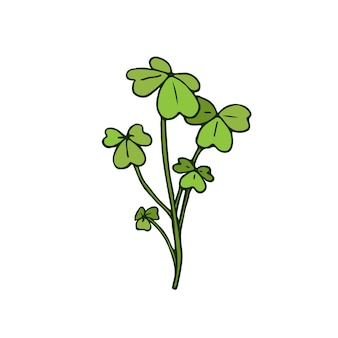 Wild flower illustration. shamrock herbal. vector art.