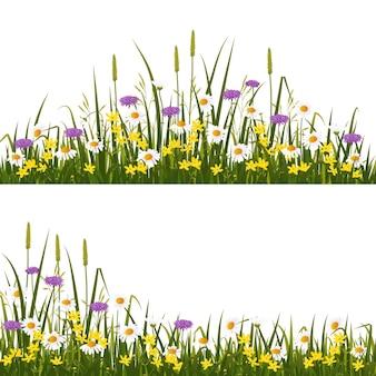野生の花の牧草地、白い背景イラストで隔離