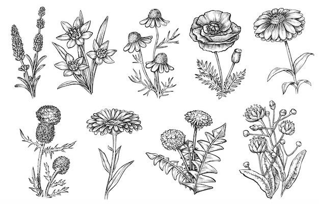 野生の花。天然ハーブと雑草のスケッチ集。