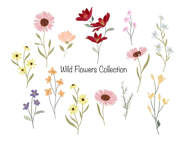 Wild flowers bunch collection
