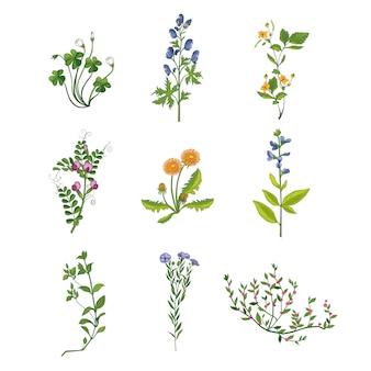 Дикие цветы рисованной коллекция подробных иллюстраций