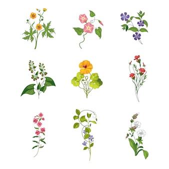 野生の花の手描きの詳細なイラストのセット