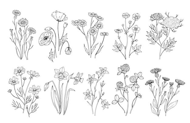 Полевые цветы. эскиз полевых цветов и трав природы ботанические элементы гравировки в стиле. нарисованный рукой комплект поля вектора цветения лета
