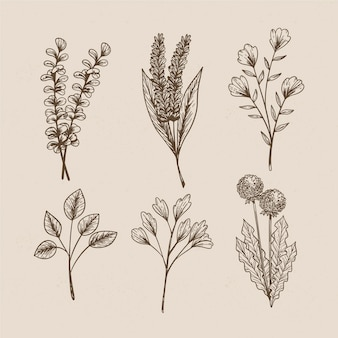 Wild flowers in vintage style for botanical studies