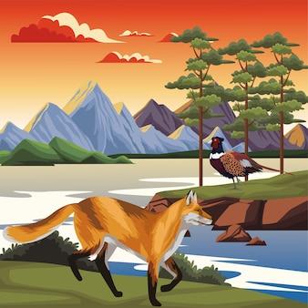 Wild fox with pheasant in the landscape scene