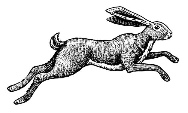 Дикий заяц или кролик прыгает