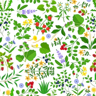 Wild herbs flowers and berries seamless pattern.