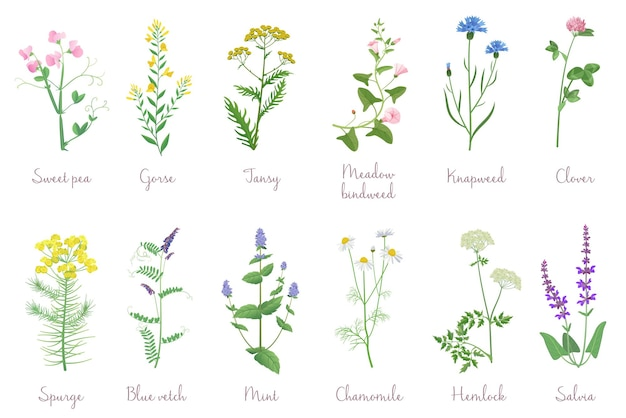 Дикие травы с именами
