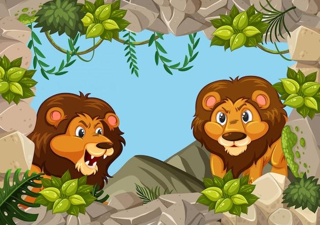 Wild lion in nature rock