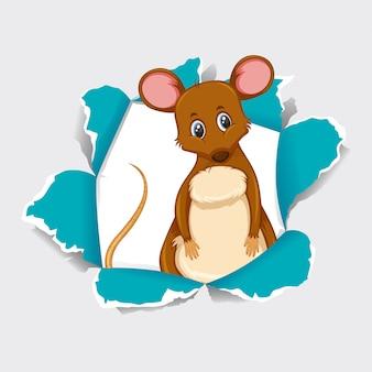 Дикая мышь на сером