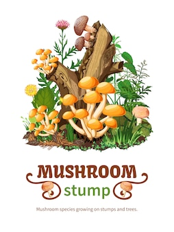 Wild mushroom species growing on stump background