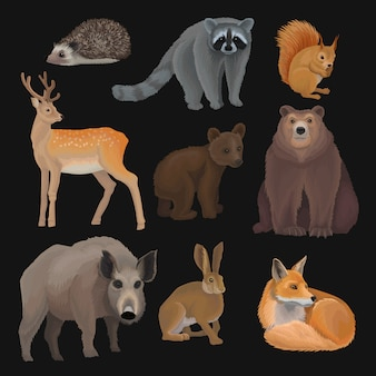 Wild northern forest animals set, hedgehog, raccoon, squirrel, deer, fox, bear cub, wild boar