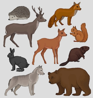 Wild northern forest animals set, hedgehog, raccoon, squirrel, deer, fox, hare, beaver, wolf
