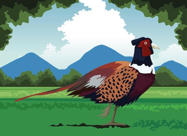 Wild pheasant bird farm in the landscape scene Premium Vector