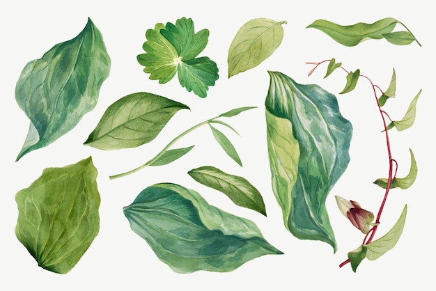 Набор рисованной иллюстрации с зелеными листьями дикого растения, ремикс из произведений мэри во уолкотт