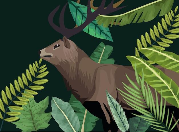 森のシーンで野生のトナカイ動物
