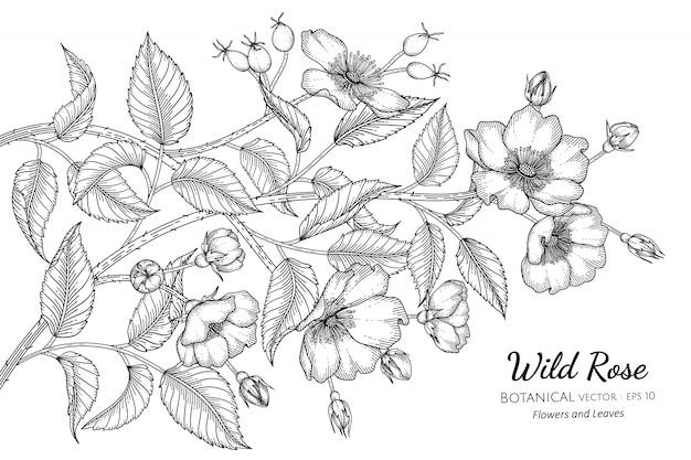 Цветок шиповника и лист рисованной ботанической иллюстрации с линией искусства