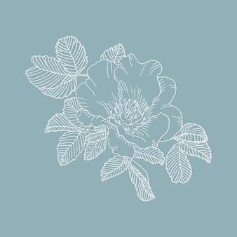 野生のバラの花、線画の描画。青い背景のローズヒップ。デザインの要素。