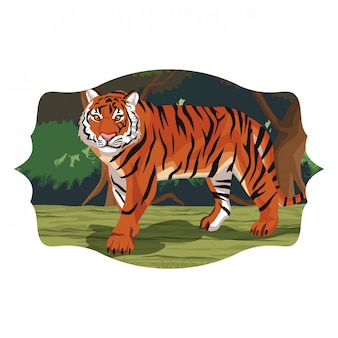 Wild tiger cartoon
