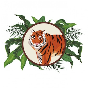 Wild tiger cartoon