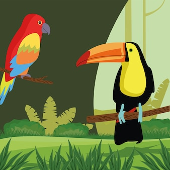 Wild tropical parrot and toucan birds nature icon