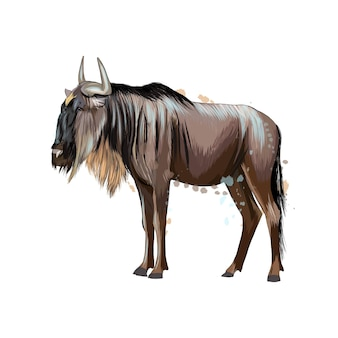 Wildebeest from a splash of watercolor, colored drawing, realistic. vector illustration of paints