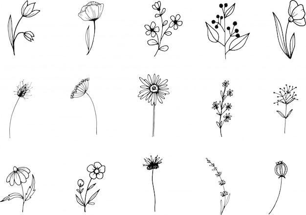 Wildflower, line art doodle clipart, hand drawn