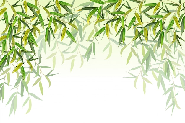 Willow branches. vector illustration.