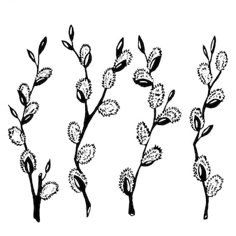 Ветви ивы
