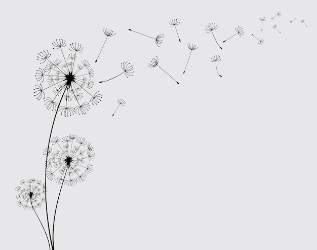The wind blows the seeds of a dandelion