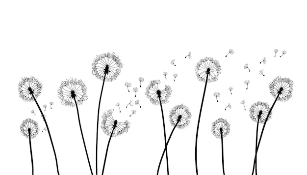 The wind inflates a dandelion isolated on white