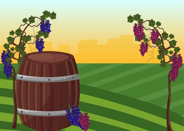 Wine barrel and grapes harvest vector background