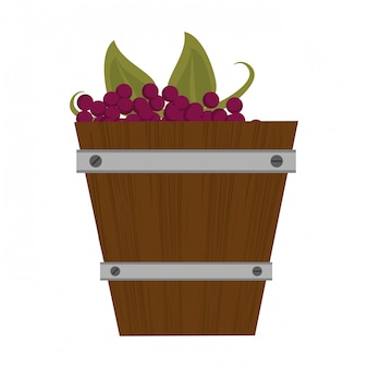 Wine grapes in wooden bucket isolated