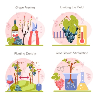 Wine production concept set. grape selection and cultivation. grape pruning