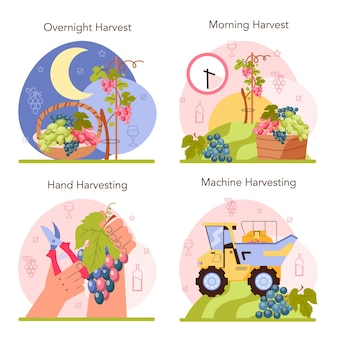 Wine production concept set. grape selection, cultivation and harvesting. alcohol drink characteristics. grape wine in a bottle or glass. flat vector illustration