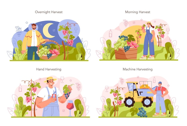 Wine production concept set grape selection cultivation and harvesting